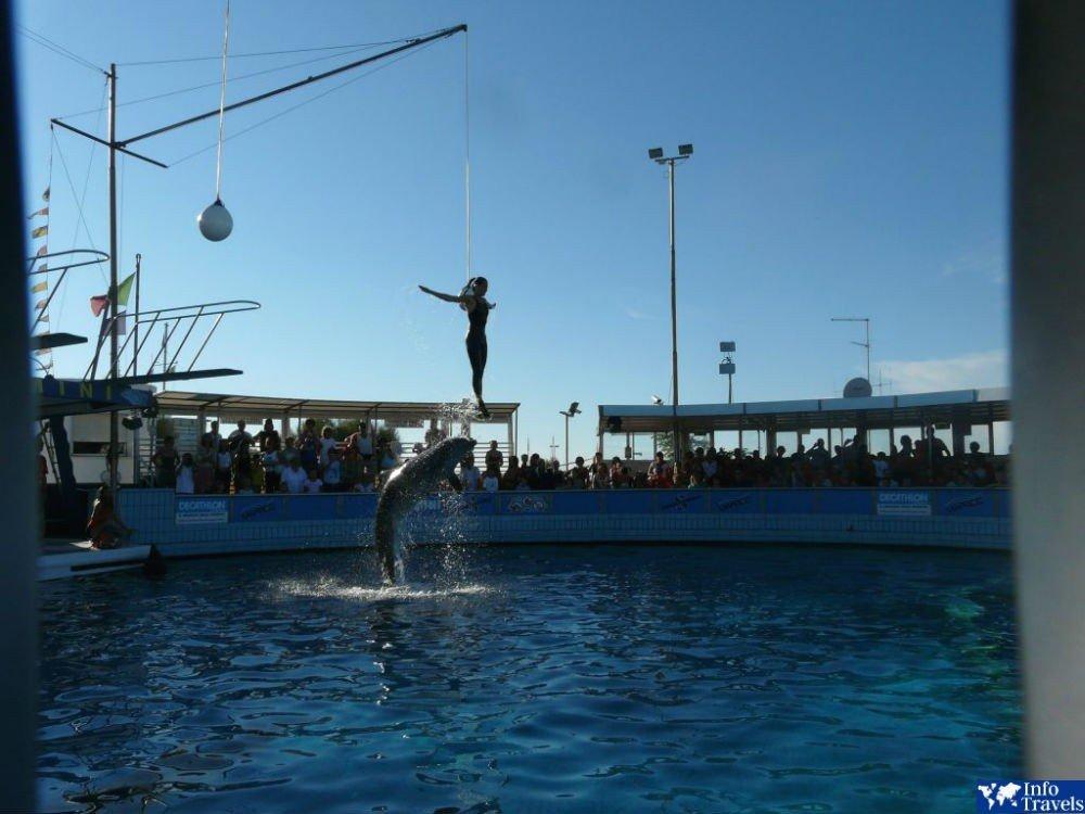Дельфинарий Римини (Delfinario)