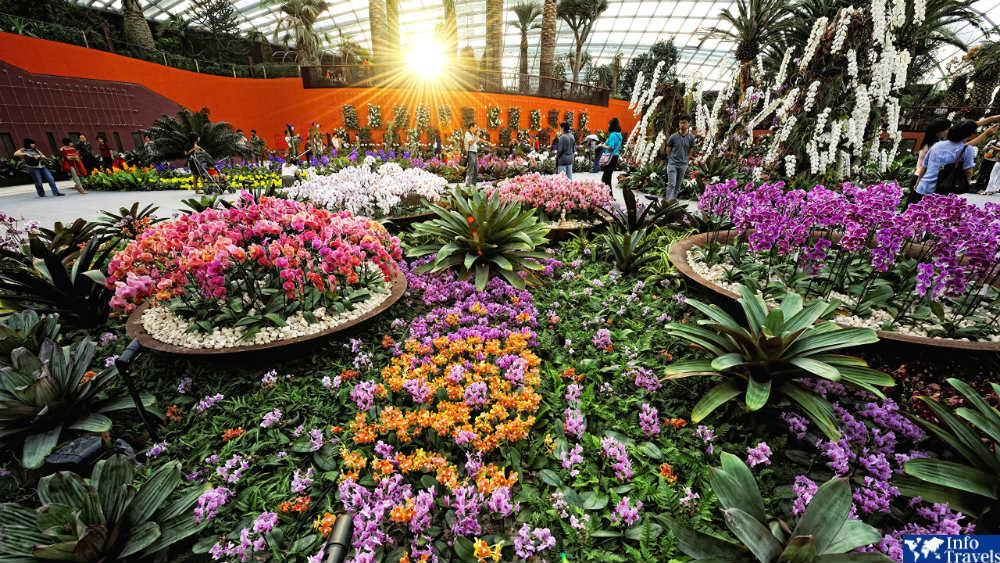 Сад с орхидеями в Сингапуре