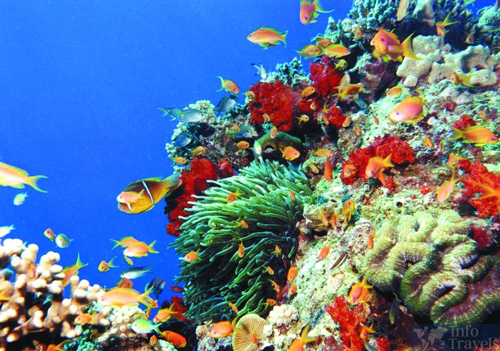 Коралловый риф в Красном море. Акаба