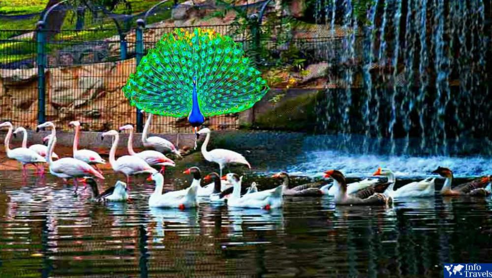Птичий парк в Агадире